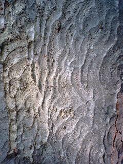 この木、分かります?
