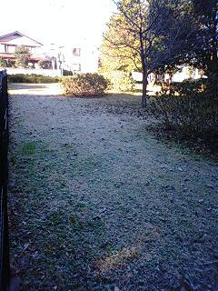 霜が降りている。