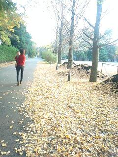 イチョウ並木 落ち葉