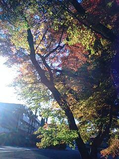 都内ではまだまだ紅葉が楽しめる♪