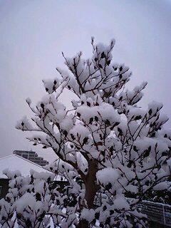 同じ樹氷でも…。