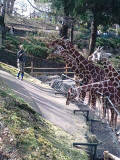 多摩動物園のキーパーズトーク。